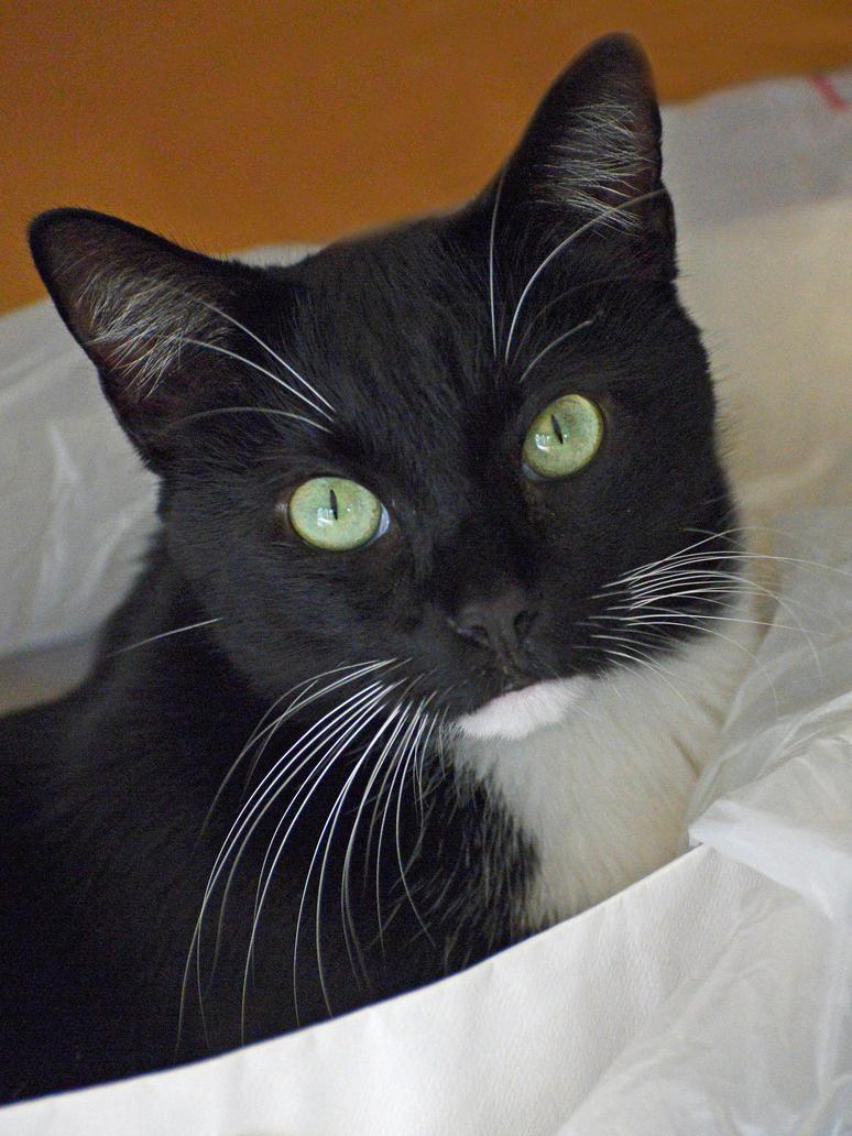 Felix in a plastic bag by NB-PhotoArt