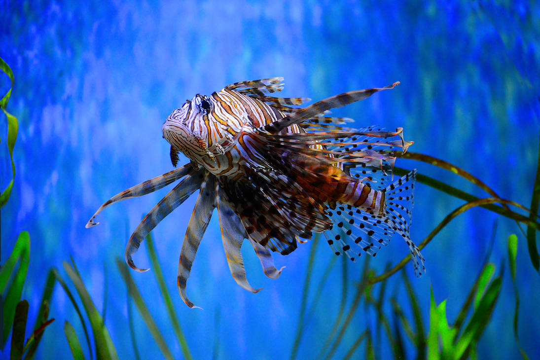 My favorite fish by NB-Photo