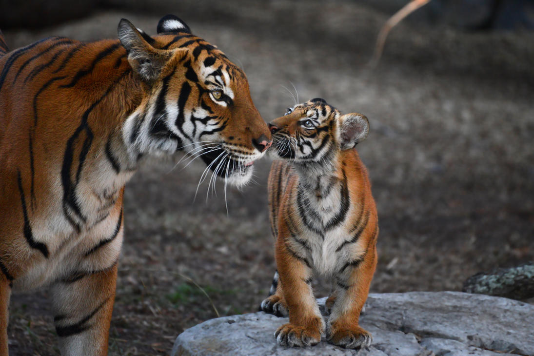 Tenderness by NB-Photo