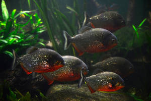 Voracious fish by NB-Photo