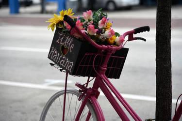 Little Havana Flowers by NB-Photo