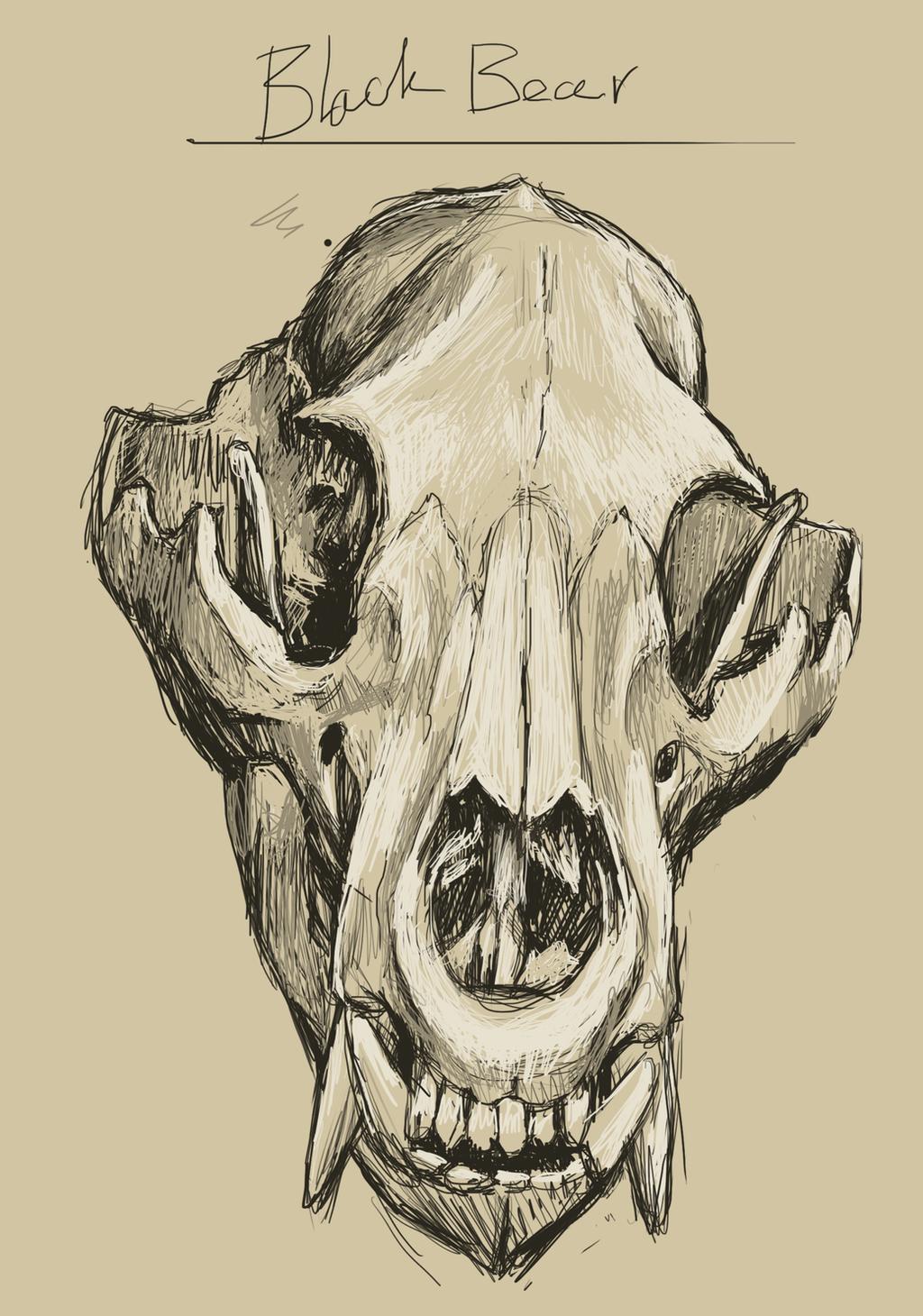 Bear Skull Drawing Black Bear Skull by Pa...