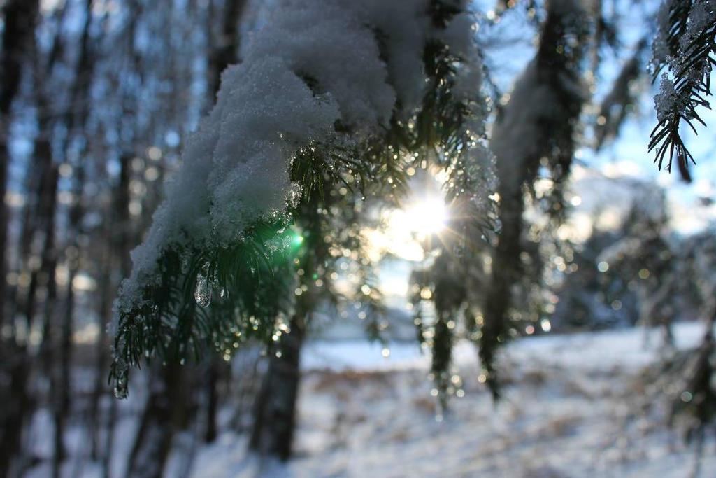 Frozen Light by lardix3