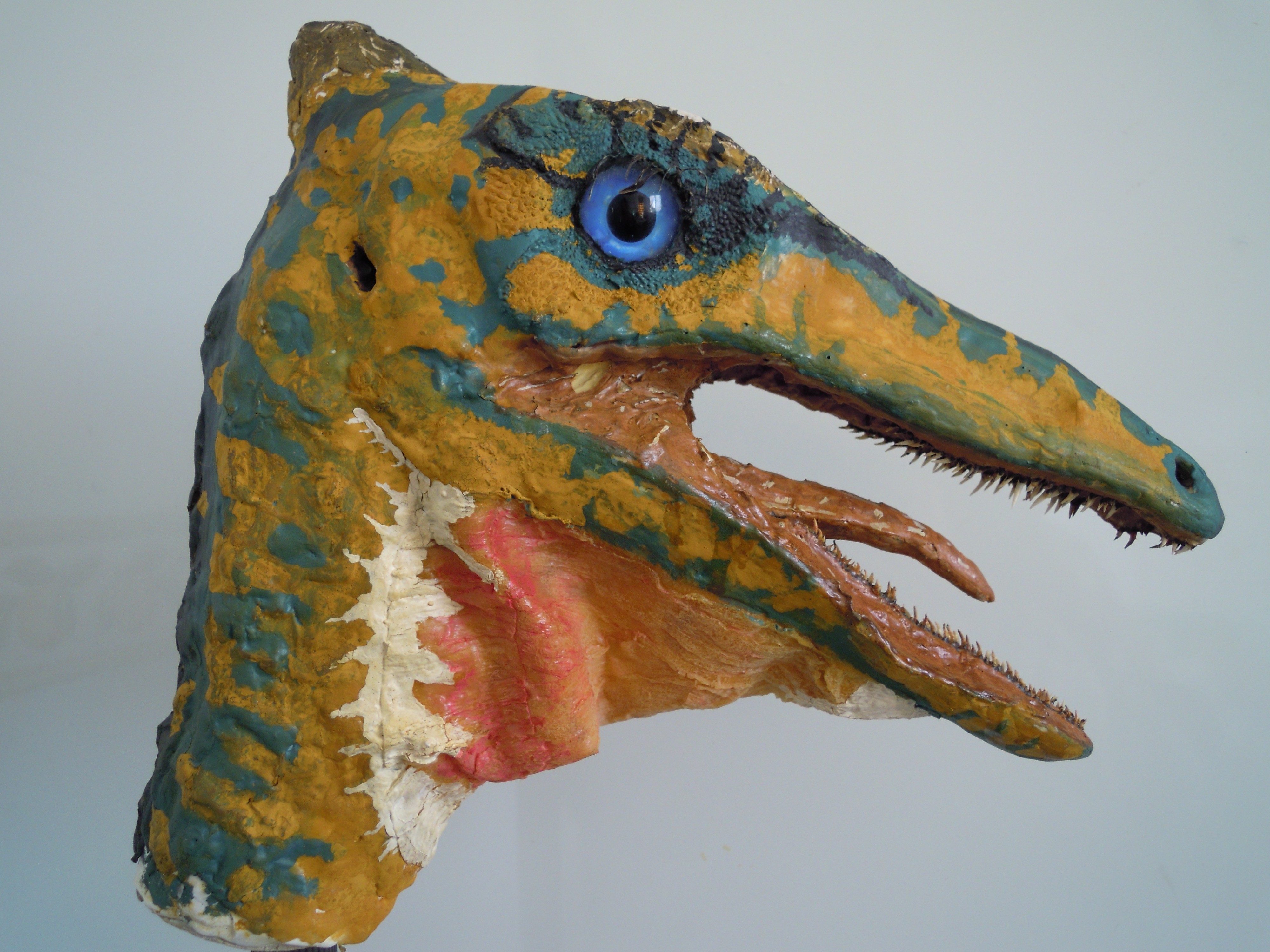 Pelecanimimus polyodon