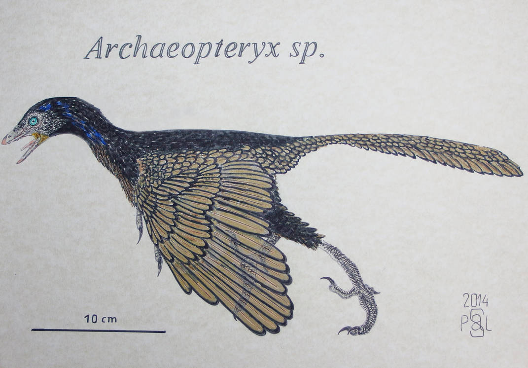 Archaeopteryx sp. by PedroSalas