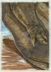 Carnotaurus arm