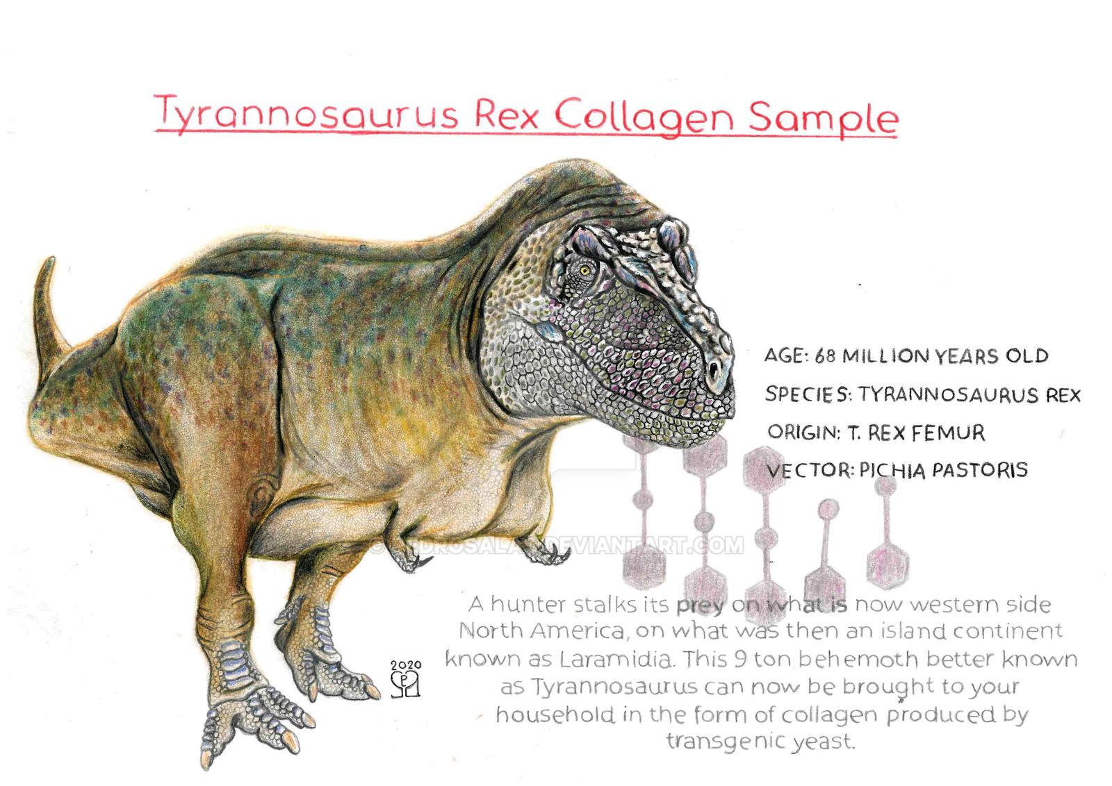 T. rex collagen