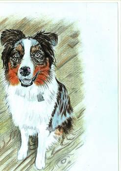 Calico dog