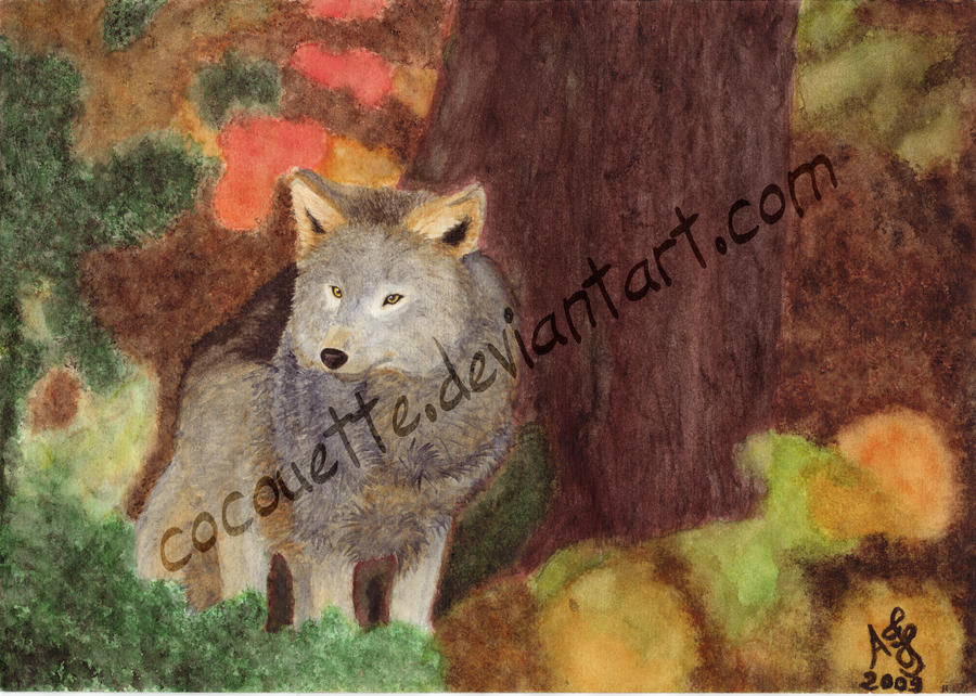 A wolf in forest by cocouette
