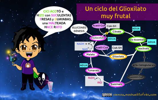 Ciclo del glioxilato