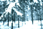snowforest 2 by Jared1