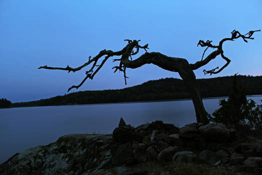 Gandalf's Tree
