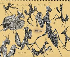 Mantis sketching by inubiko