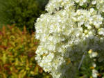 Bundle of White by lollypops42