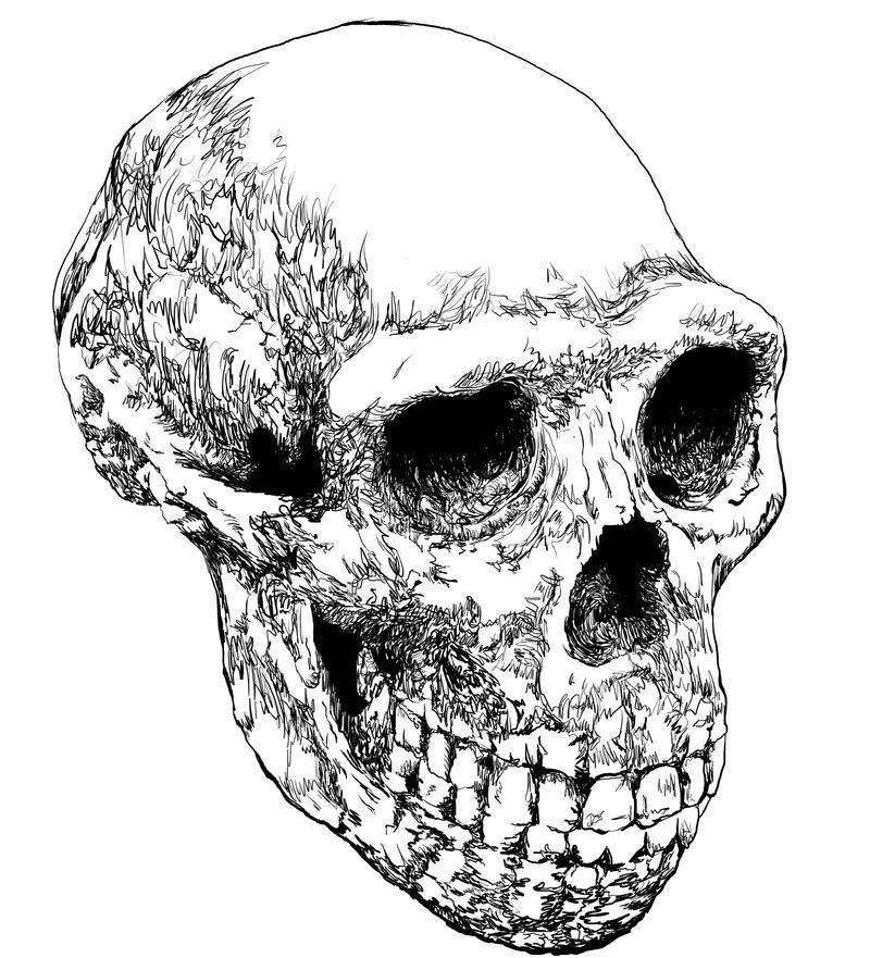 Homo Erectus Drawing H...