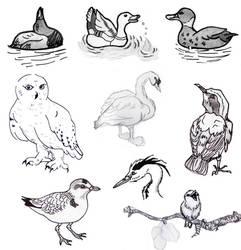 Sketches: birds