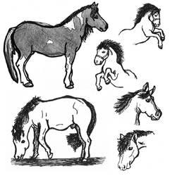 Sketches: horses