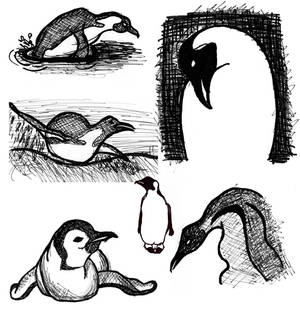 Sketches: penguins