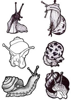 Sketches: snails