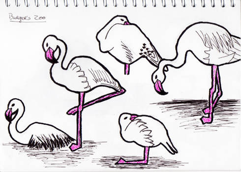 Sketches: Flamingos