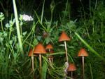 Mushrooms1