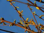 Yellow burst of spring....