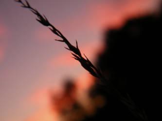 Last Light by hawkwing22