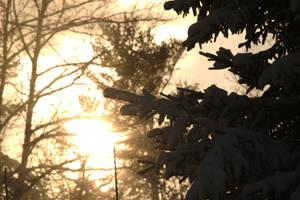 Winter Spray by hawkwing22