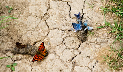 Butterflies by joe279