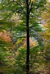 Forest by joe279