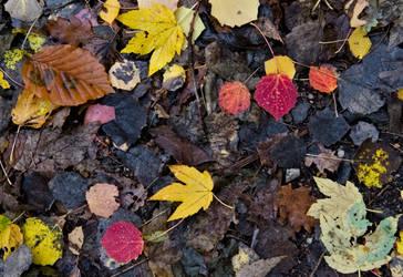 Leaves by joe279