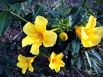 Yellow flower by muhadi65