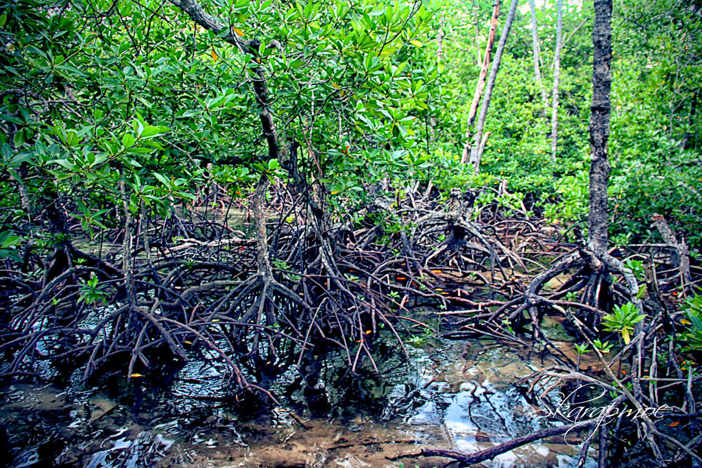 Mangrove forest by muhadi65