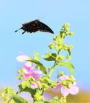 Fluttering by....
