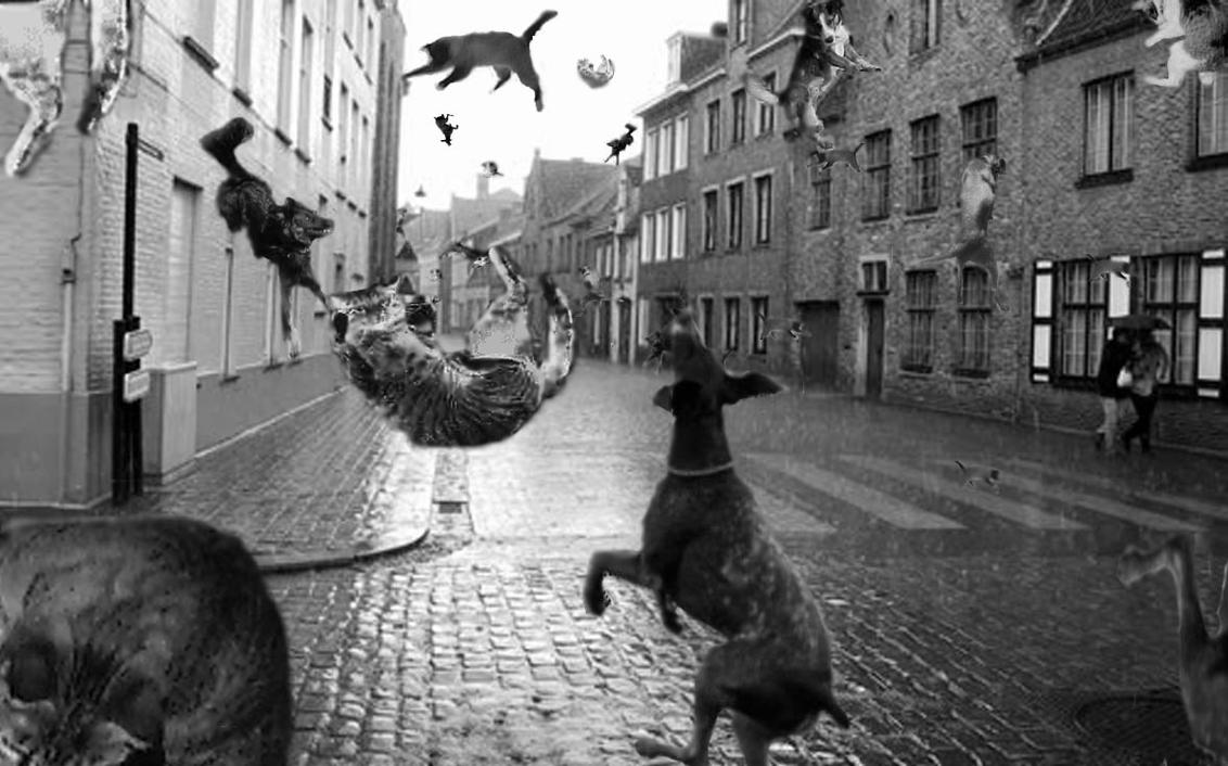 Where Did It S Raining Cats And Dogs Come From