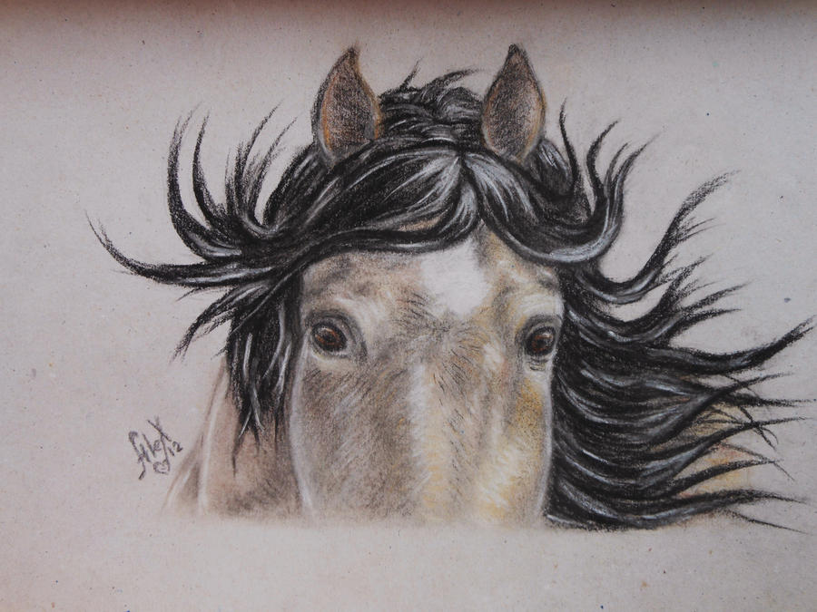 Horse portrait 3 by Sandra-Cooper