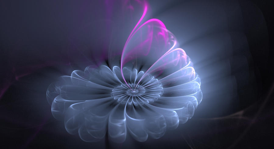 daisy bloom by fractal2cry