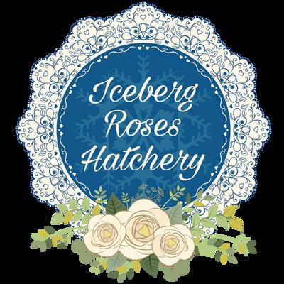 iceberg_roses_hatchery_logo_400p_by_adriannavo-db5taxg.png