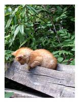 Kitten by bubulincho