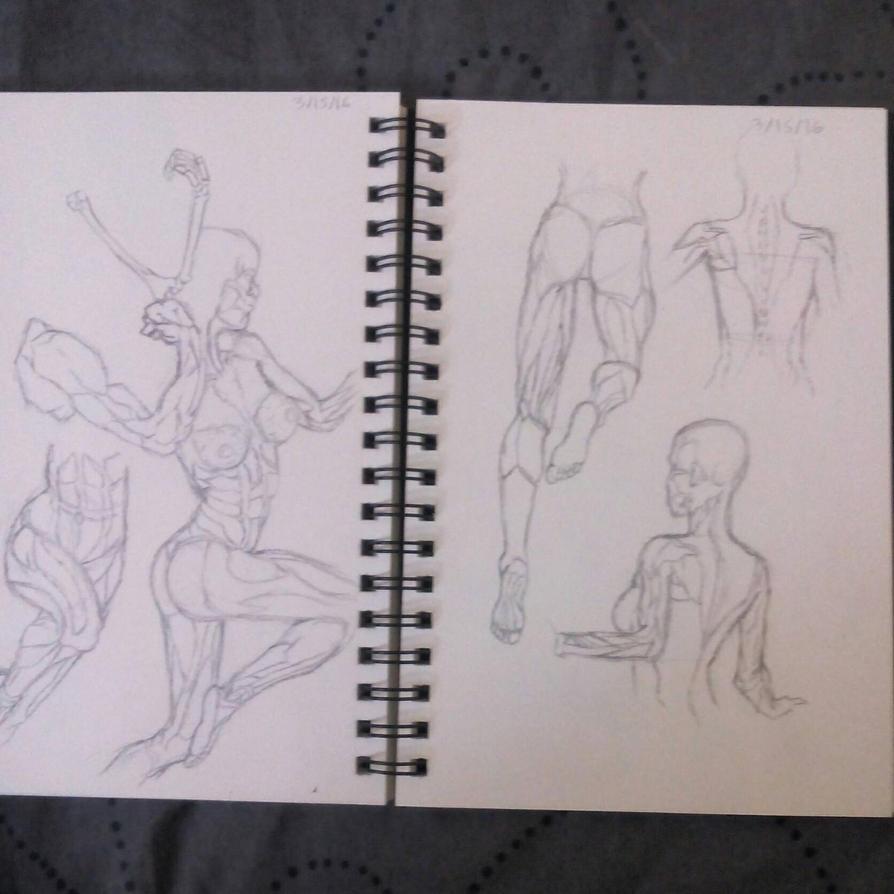 Female Anatomy practice #1 by zf705 on DeviantArt