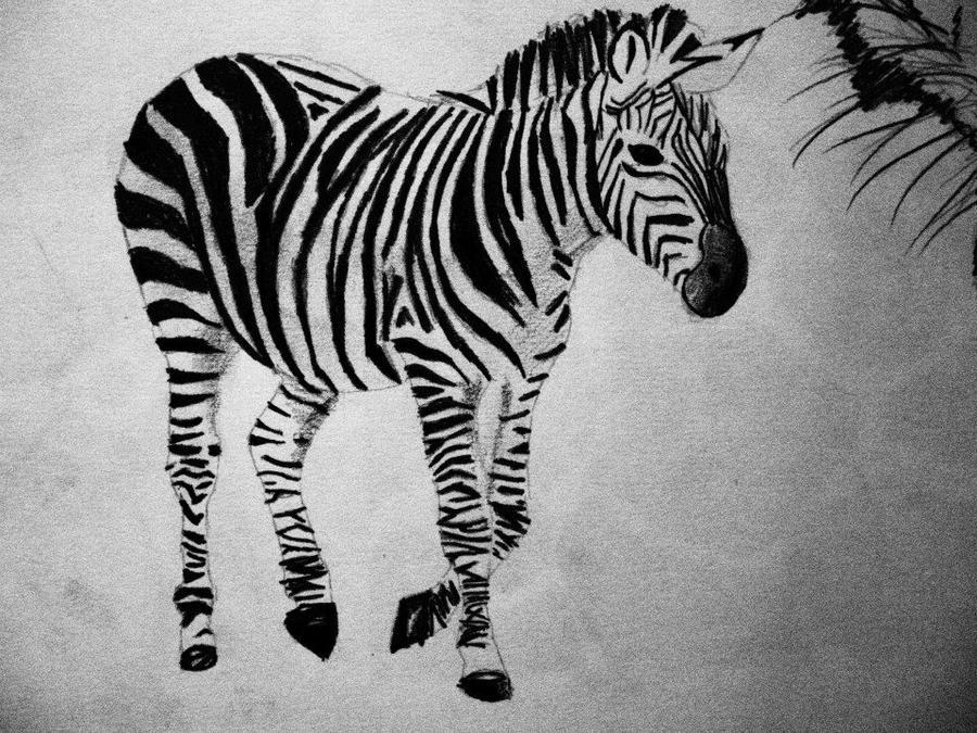 Zebra Drawing Easy Zebra Pencil Draw...
