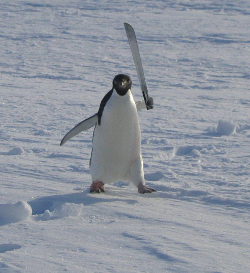 angry_penguin_by_terratus_d4u6776-fullview.jpg?token=eyJ0eXAiOiJKV1QiLCJhbGciOiJIUzI1NiJ9.eyJzdWIiOiJ1cm46YXBwOiIsImlzcyI6InVybjphcHA6Iiwib2JqIjpbW3siaGVpZ2h0IjoiPD04NzIiLCJwYXRoIjoiXC9mXC84ZTU1NmNhMi1jNzY1LTQ4NWQtOTUzZC0wZDdiNmFiYjczOThcL2Q0dTY3NzYtZTdiYjFjZTUtNTM2MS00MDYzLTg0YmQtZjJkZDE5ZDA1OWE0LmpwZyIsIndpZHRoIjoiPD04MDAifV1dLCJhdWQiOlsidXJuOnNlcnZpY2U6aW1hZ2Uub3BlcmF0aW9ucyJdfQ.oZzzWkfXA6bLUaXzk-hT5YxI1ojoVsSAGrYAYMlcCWc