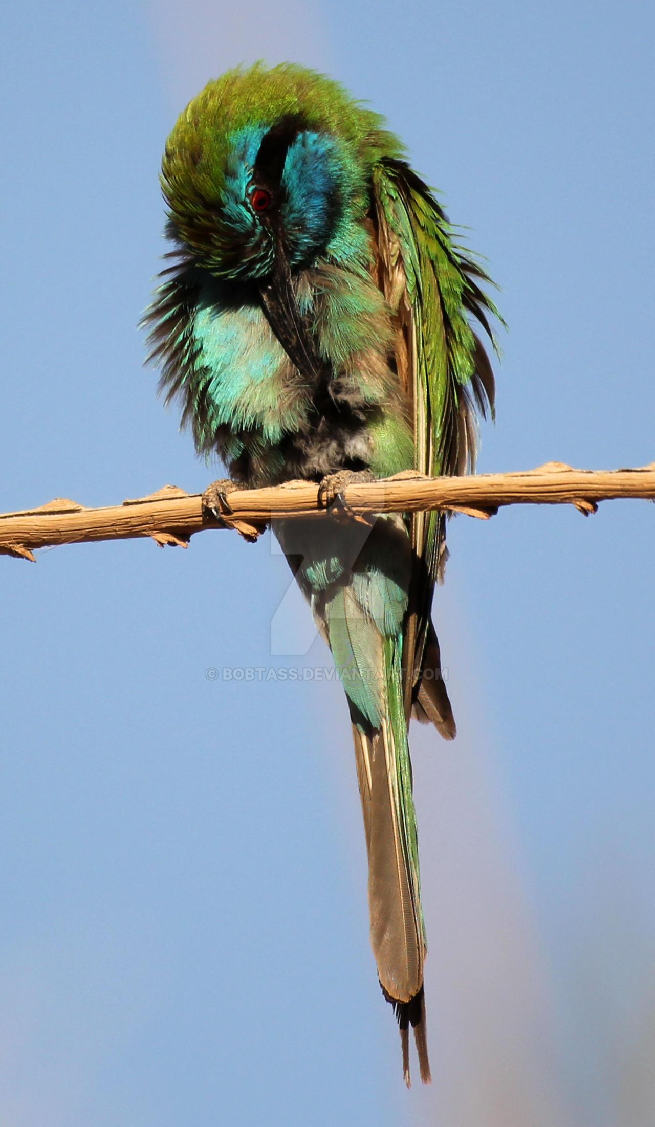 birdie 18 by BobTass