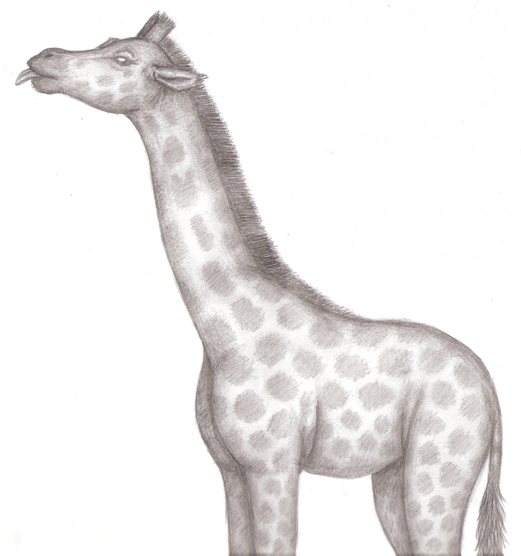 How To Draw Giraffe Parts