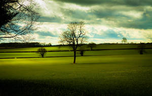 Green field by Wrightam