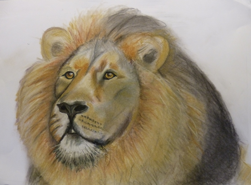 Lion by Jills-Designs