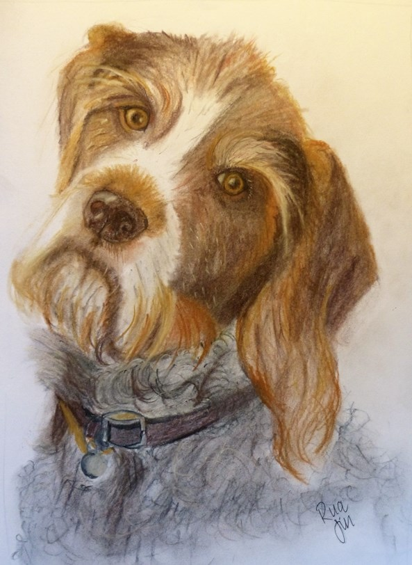 Rua German Wirehaired Pointer in Tinted Charcoal by Jills-Designs