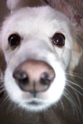 my dog Taffy