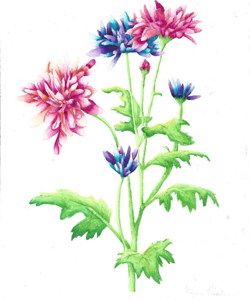 Chrysanthemum by ktpdragon