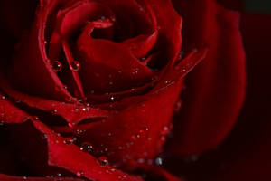 Red Flower 02